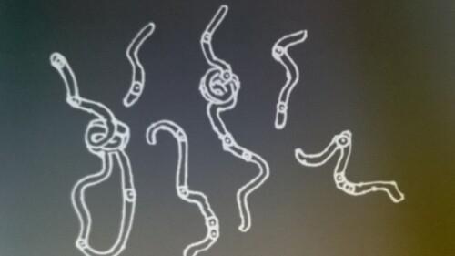 10 : Nos yeux contiennent une carte ADN