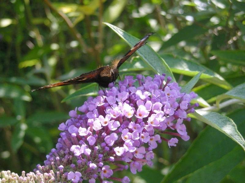 Visite de papillons .....