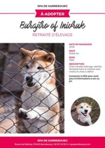 Sauvetage de chiens nordiques retirés d'élevage / SPA de Sarrebourg et Forbach