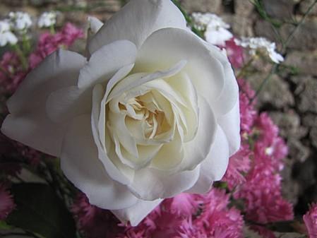fleurs de chez ma grand mére (16)-copie-1