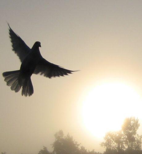 oiseau-libre.jpg