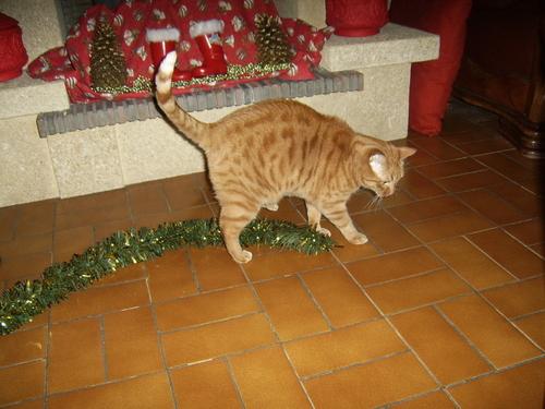 Noël chez Doly