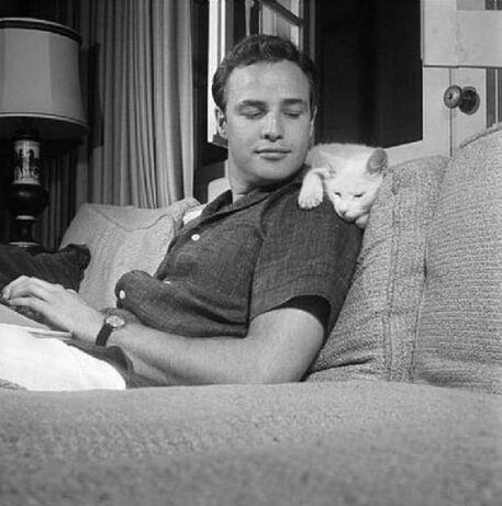 Stars au masculin et chats