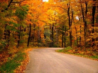 7718308-a-country-road-in-the-fall