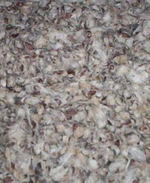 Litières hamster russe