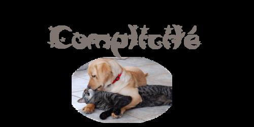 Complicité