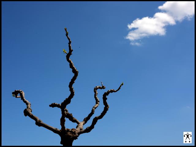 Hommage au ciel bleu