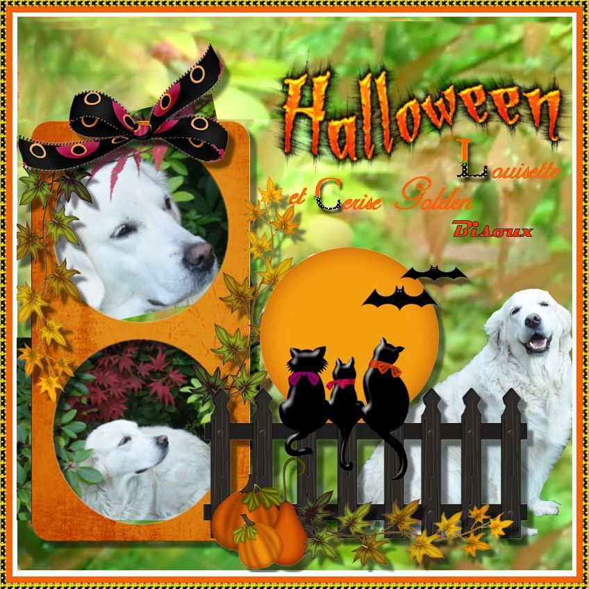 halloween , golden retriever, louisette, scrap, cerise,