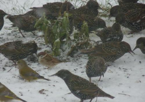 neige et oiseaux