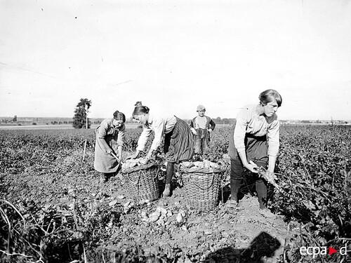 Le rôle des femmes dans la grande guerre