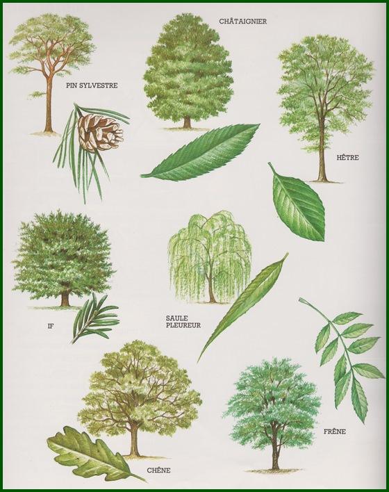 """compagnon de vie """"l'arbre""""  - cheznous62"""