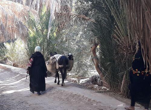 Transport en commun dans la palmeraie