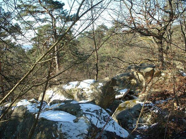 Neige à Fontainebleau