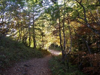 Forêt Croix du Nivolet