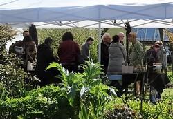Visite aux jardins Amoena (1ère partie)