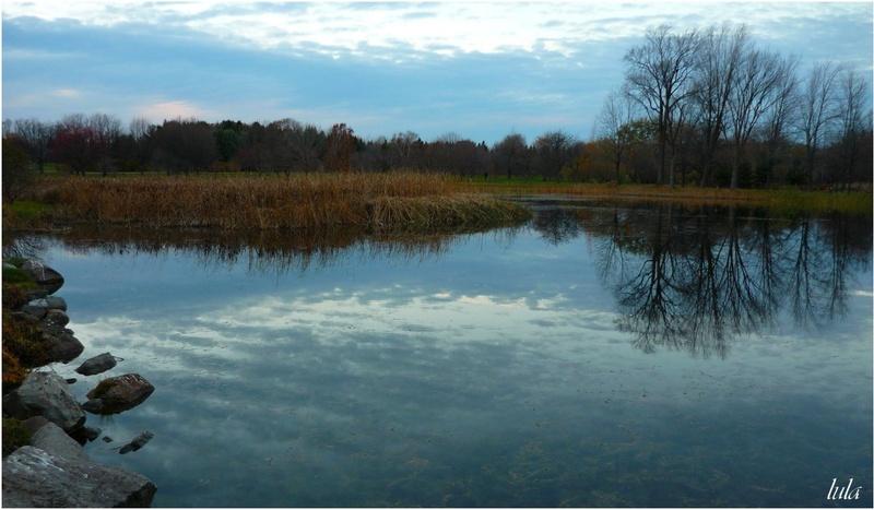 Reflets sur les étangs du Jardin Botanique (novembre)