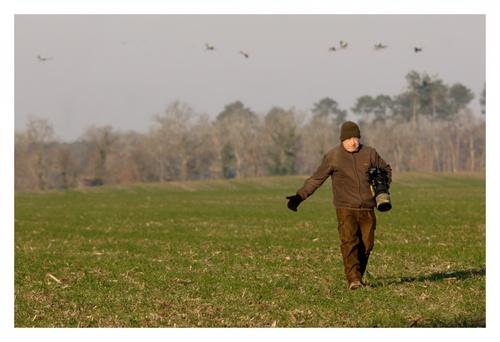 Comment bien Photographier les grues cendrées