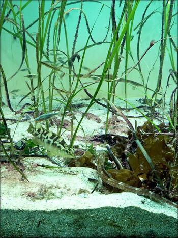Photos de l'aquarium tempéré - Océanopolis Brest