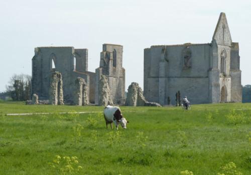 Abbaye des Châteliers vache et Evelyne