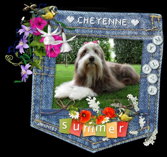 ♥ Cheyenne 14 ans et demi ♥ * photos été 2021