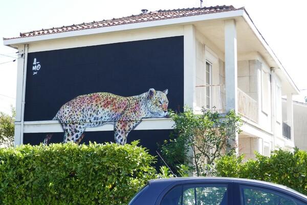Un léopard par chez nous !