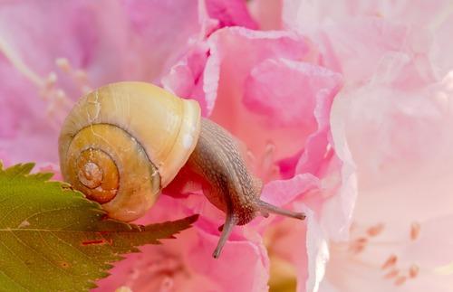 Les escargots ont les coquilles plus claires pour résister à la chaleur
