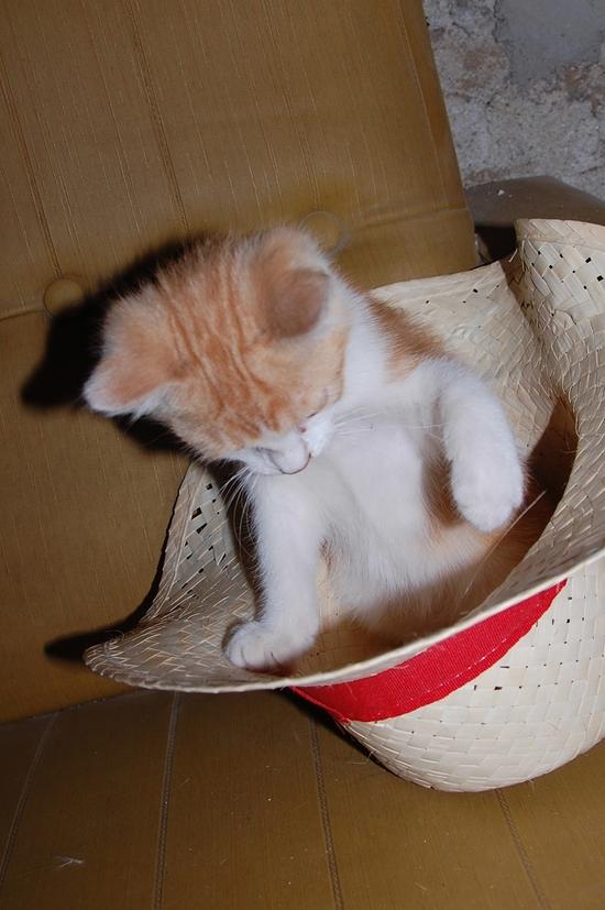 chaton12juilleti