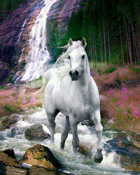 Anne Mahieu, le cheval en prison