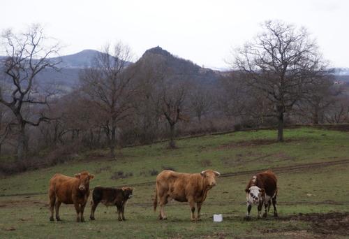 Auzat sur Allier.Randonnée du 30.01.2019.12 kms