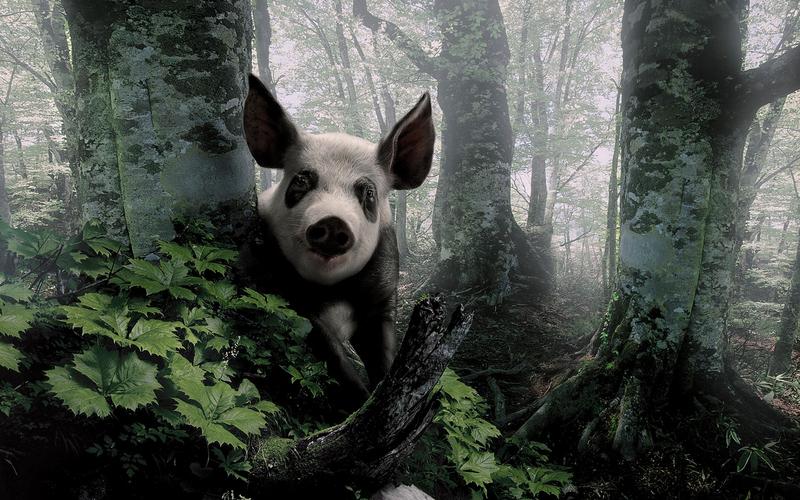 20 photos d'animaux - 7