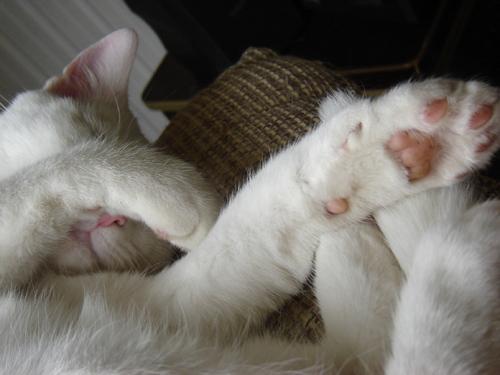 Les pattes du chat...