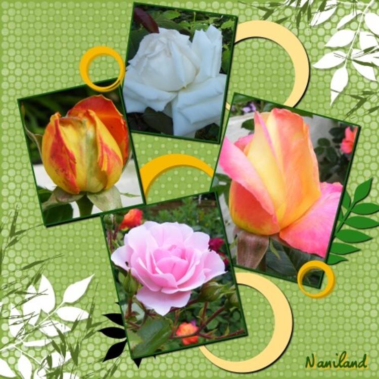 Juin dans nos Jardins