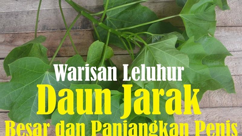 ramuan herbal pembesar alat vital ramuan herbal jamu obat