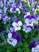 Fleurs d'hiver dans mon jardin