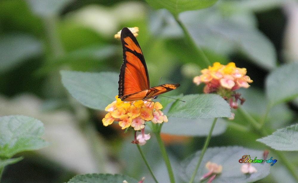 """L'ile aux papillons """" suite"""""""