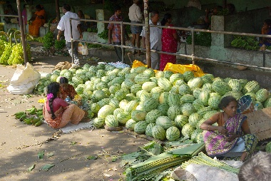 shop watermelon
