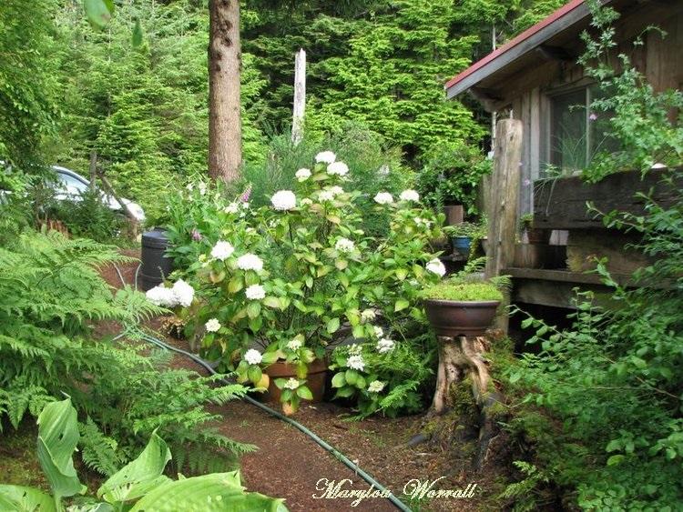 Nouvelles du Canada 98 : Regards sur le jardin