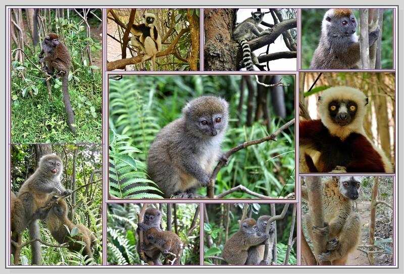MADAGASCAR  LES  LEMURIENS No 2
