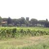 Les dernières vignes avant Rome