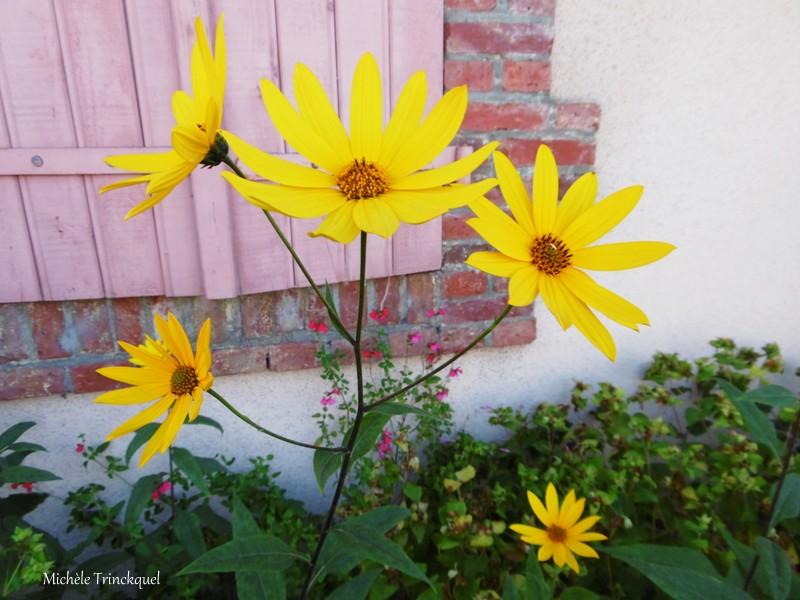 Une autre balade fleurie dans mon village, le 22 septembre....