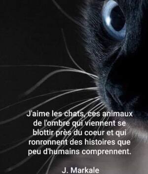 Portraits de chats noirs