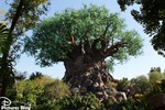A wild time around Disney's Animal Kingdom