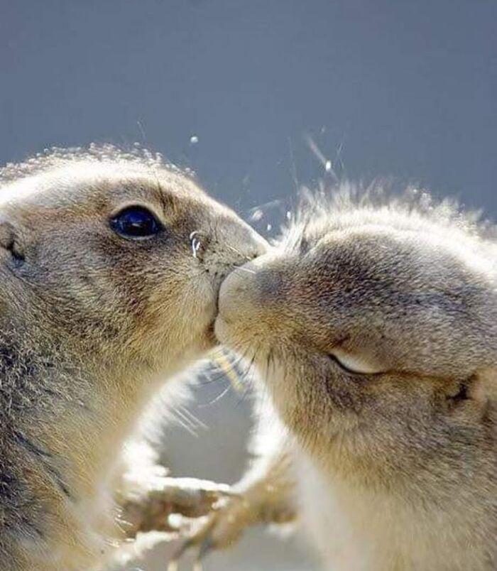 un gros bisou de mes marmottes