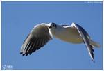 Oiseaux Variés 3 (Photos Laurent)