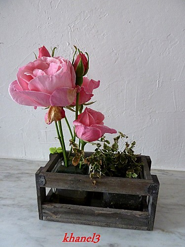 rose--3-.JPG