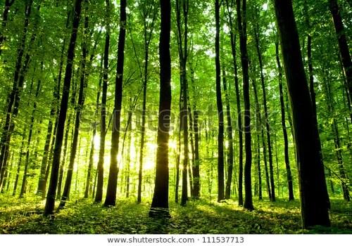 Le message de la forêt
