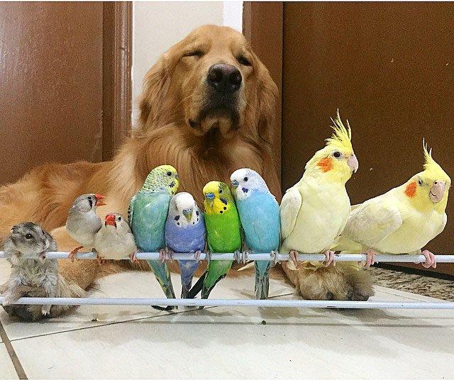 Ce chien mérite la plus belle médaille d'or qui pourrait exister au monde !