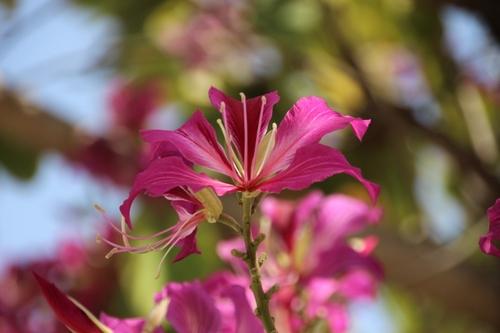 À Udaipur, oiseau, fleurs et jolis sourires