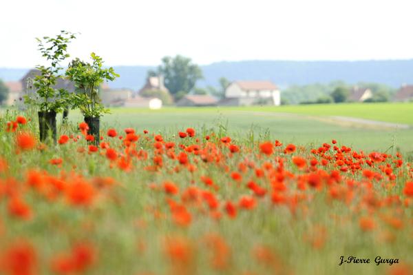 """""""Florilège de pétales et de fruits"""", toujours de superbes photos de Jean-Pierre Gurga...."""