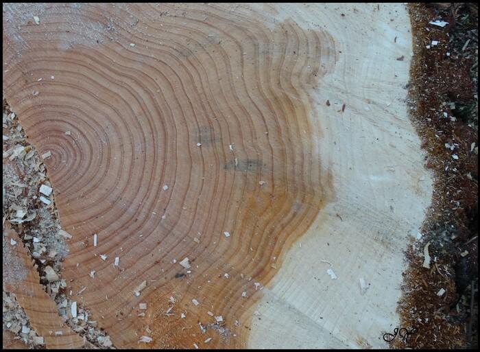 L'âge d'un arbre.